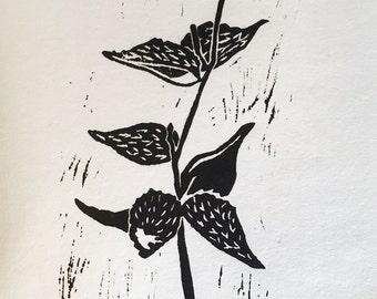 """Milkweed 5x7"""" Linoleum Block Print"""