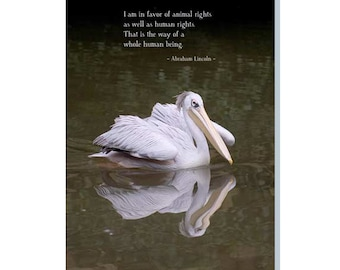 A Pelican On The Water - An Everyday Greeting Card