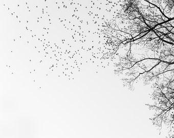 "birds flying, black & white photograph, wings, neutral wall art, fine art- 16x20, 11x14 or 8x10 print, ""Onward and Upward"""