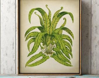 Botanical print, fern print , botanical wall decor, vintage fern wall art, cottage home decor, Botanical chart, 8 x 10 fern print