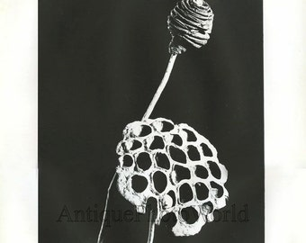 Empty flower seed box abstract vintage art photo