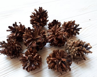Pine cone, dry pine cone, Pine cone for DIY, set of 10 Pine cone