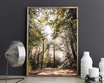 Forest Light, Chattahoochee National Forest, Blue Ridge Mountains North Georgia Nature Photography, Landscape Wall Decor, Fine Art Print