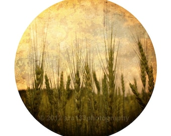 Rustic Photography, Neutral Home Decor, Nature Photograph, Landscape Photo, Tan, Brown-Round Image on an 8x10 inch Print -In The Grasses