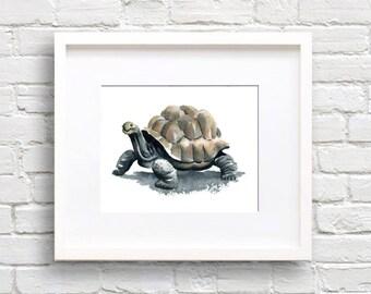 Tortoise Art Print - Animal Art - Wall Decor - Watercolor Painting