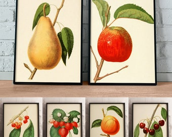 Vintage Fruit Prints, Set of 6, Printable Kitchen Art, Apple, Pear, Cherries, Strawberries, Instant Download, Botanical Print, Farm House
