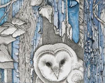 Baby Barn Owl 8x10 Giclee Print