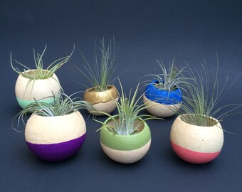 Air Plant Pod - 2 pack - warm colors