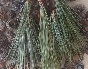 1 lb Red Pine Needles
