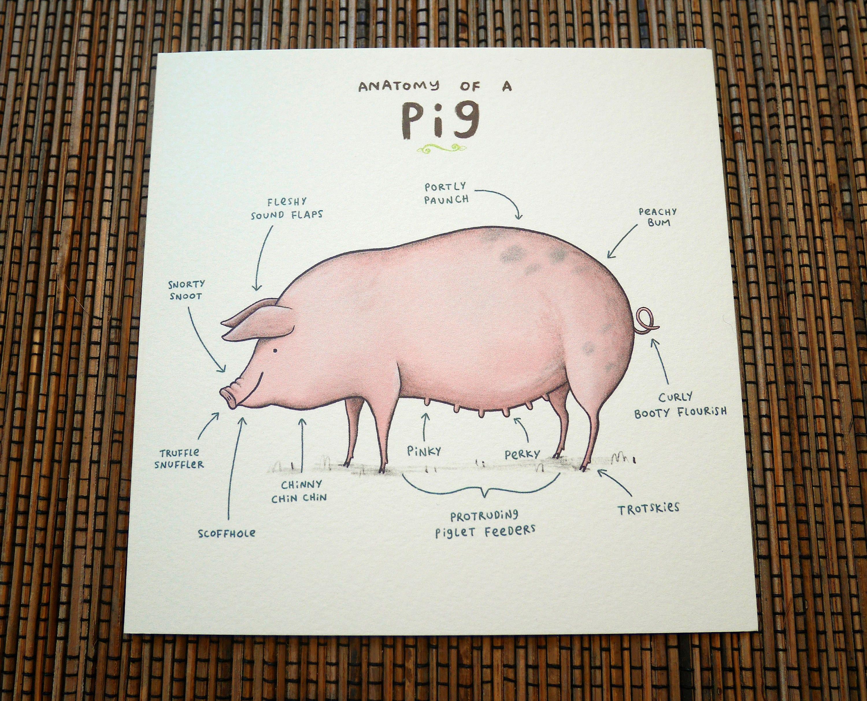 Groß Männliches Schwein Anatomie Fotos - Anatomie Ideen - finotti.info