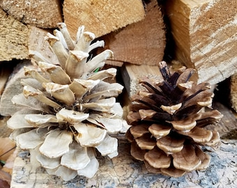 Bleached Pinecones - Set of 40
