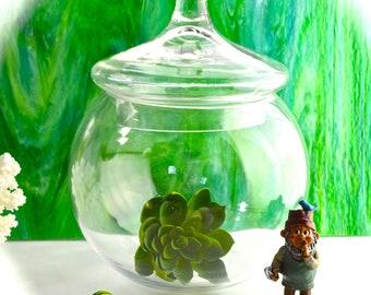 "Apothecary Jar, Terrarium Jar 9.5"" Tall ~ Candy Jar ~ Glass Jar with Lid ~ DIY ~ Terrarium Supply ~ Fairy Garden Supplies ~ Jar and Lid Only"