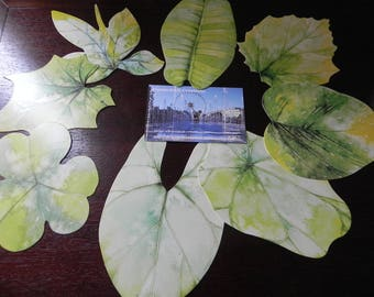8 postcards depicting leaves of trees/flowers minimum 9 cm x 7 cm