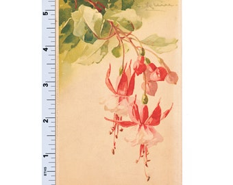Catherine Klein Flowers Postcard - Fuschias Hanging Plant Post Card - Floral Card Artist Signed Meissner & Buch