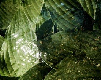 Landscape , Fine Art Photography, Nature Photography, Print, Wall Art, Leaves, Imaginary landscape