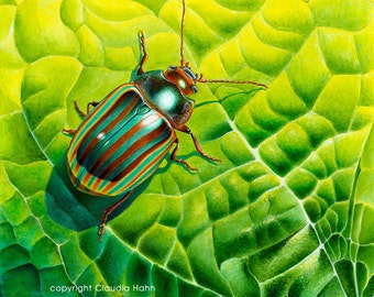Large PRINT 'Rosemary beetle' (Chrysolina americana)