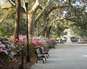 Photography, Savannah Photography, Fountain at Forsyth Park Savannah