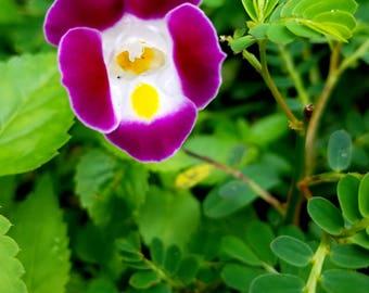 A tiny little flower