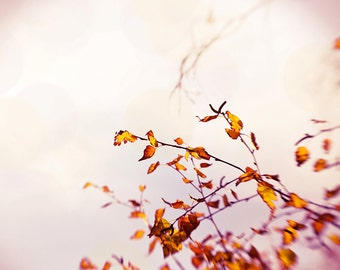 autumn photography leaves 8x10 8x12 fall photography fine art vintage inspired autumn leaves tree photography nature rose gold orange beige
