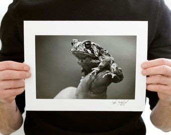 American Toad Close Up Photograph (9 x 6 inch Fine Art Print) Black & White Nature Photography
