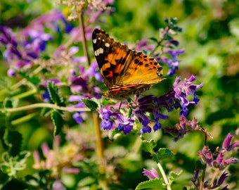Nature Photography, 'The Butterflies are Free', '8.5 x 11', Fine Art Photography, Limited Edition, Butterfly, Living Room Decor