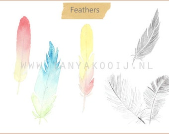 Hand Drawn Feathers in PNG and JPEG, High Resolution 300 DPI
