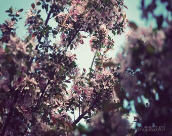 Clearance Sale - Flower photography, nature photograph, spring, pink, girly, dreamy, wall art, home decor - Flowering Tree