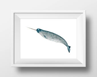 Narwhal Art Archival Print, Watercolor fine art home decor, 8x10 11x14, children's room art, whale painting