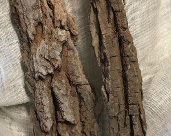 Tree Bark Heaven