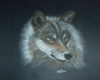 beautiful Wolf drawn in pastels dry size 30 X 40 cm on black paper