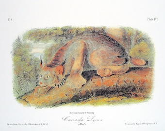 Canada Lynx 1989 Vintage Audubon Book Plate Page for Framing Naturalist Illustration
