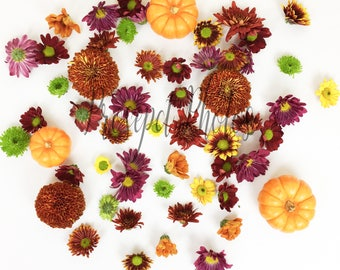 Autumn Flower stock photo | Fall styled photo | Autumn stock photo | Floral Photography