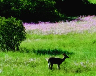 Deer in Lavender Field