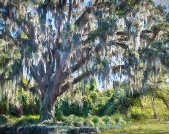Old Live Oak Tree Painting,St. Simons Island Spanish Moss Tree, SSI Tree Painting,Old Tree Wall Art Decor, Hand Painted