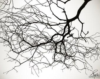 Tree print, nature photography, black white art, monochrome, black and white photography, fine art photography, framed print, matted print