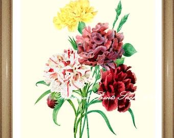 "Botanical Print. Carnation Print #1. Flower Wall Art. Dianthus. Antique Flower Print. 5x7"", 8x10"", 11x14"", 13x19"""