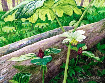 May Apple and Trillium, 8 x 10 in., giclee print