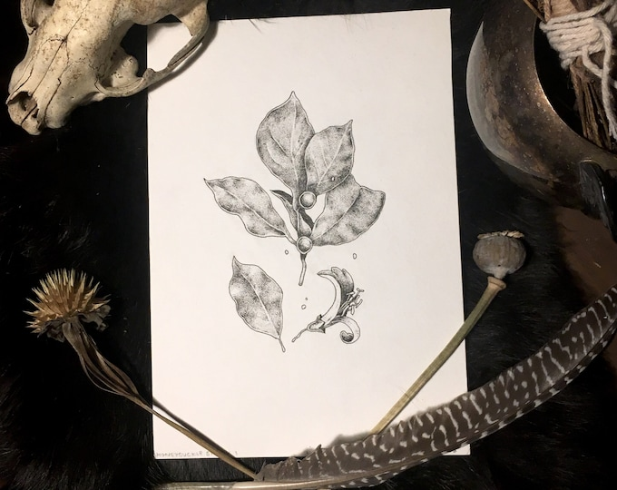 Honeysuckle Original Pen and Ink Illustration