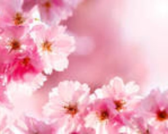 1 oz  Cherry Blossom Fragrance oil