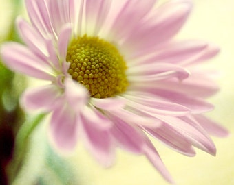 Pink yellow wall art, flower canvas photography, Daisy floral art print, baby girl room decor nursery wall art print, bedroom decor, amber