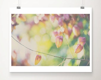 fall photograph chinese lanterns photograph nature photography tree photograph autumn photograph orange home decor