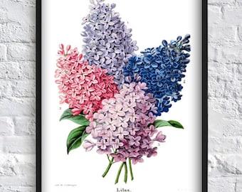 Lilac plant print lilac flower print  herb print floral wall art print Art-140