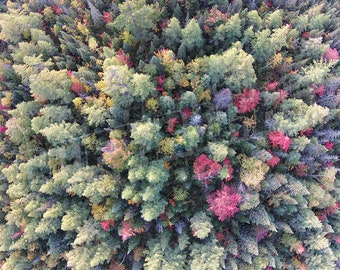 Fall Trees Aerial Photograph