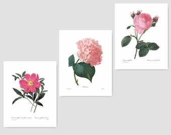 """Pink Botanical Prints (Pink Flower Wall Art, Pink Room Decor, Pink Bedroom Print, Pink Nursery French) """"Redoute Pink Flowers"""" Set of 3 SALE"""