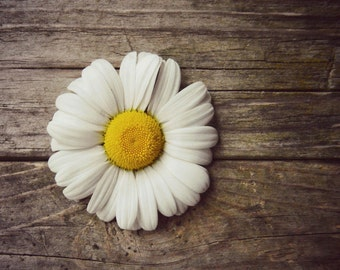 Daisy Photography, White, Yellow, Wood Background, Simple Nature Print, Rustic Home Decor, 10x8 print, A Simple Summer..