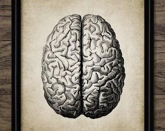 Brain Print - Human Anatomy - Vintage Human Brain - Human Brain Illustration - Printable Art - Single Print #370 - INSTANT DOWNLOAD