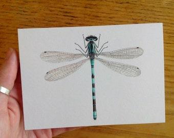 Northern Damselfly greetings card