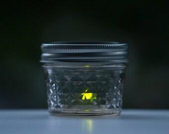 LED Pet Firefly