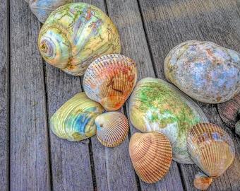 Colorful Shells Still Life, Interior Design Downloads