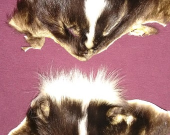 Lot of 2 Skunk Faces